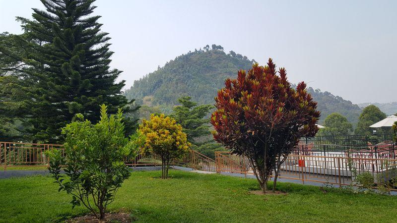 Giardinetto vicono alla terrazza del Kivu Peace View Hotel con vista sul lago Kivu