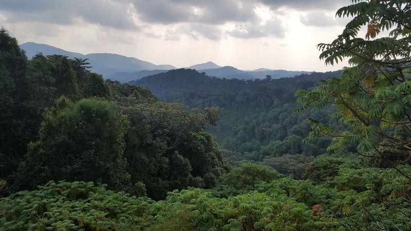 La foresta del parco nazionale di Nyungwe